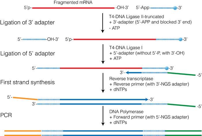 RNA-seqlopedia